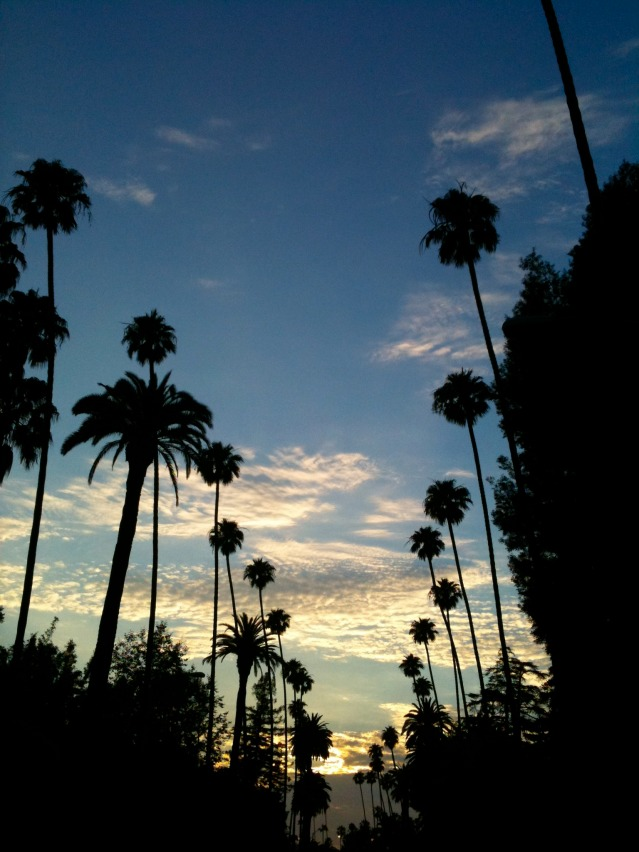 Palm trees on Canon Drive in Beverly Hills, CA