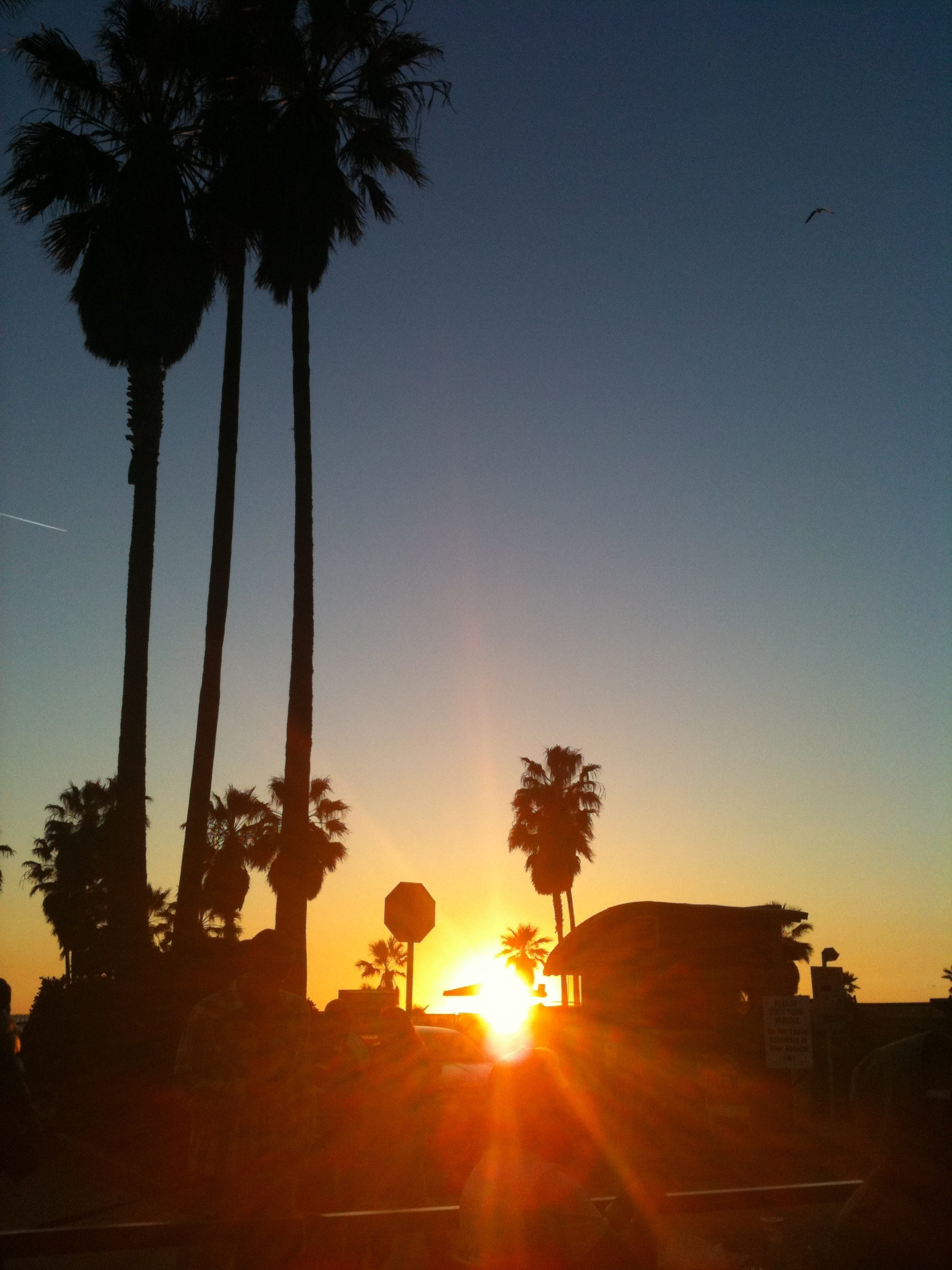 The Los Angeles Sky And Her Palm Trees Oranges And Avocados