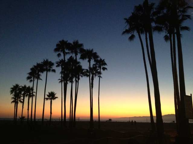 Venice Beach palm trees and sunset in August.
