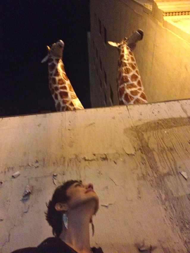 the giraffe has a very long neck